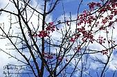 一月的楓、一月的櫻、一月的風景~:DSC_5311-1.jpg