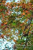 一月的楓、一月的櫻、一月的風景~:DSC_5300-1.jpg
