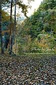 一月的楓、一月的櫻、一月的風景~:DSC_5289-1.jpg