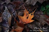 一月的楓、一月的櫻、一月的風景~:DSC_5304-1.jpg
