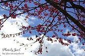 一月的楓、一月的櫻、一月的風景~:DSC_5313-1.jpg