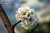 一月的楓、一月的櫻、一月的風景~:83934645.jpg