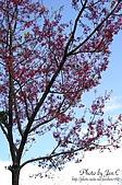 一月的楓、一月的櫻、一月的風景~:DSC_5357-1.jpg