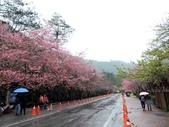 20170225台中武陵農場賞櫻趣:DSCN4433.JPG