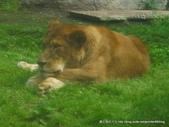 20110713北海道旭川市旭山動物園:P1170281.JPG
