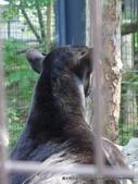 20110713北海道旭川市旭山動物園:P1170319.JPG