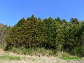 20150208日本鹿兒島宮崎第三天:P1960133.JPG