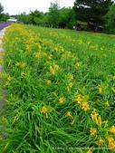 20110714富良野富田農場:P1180304.JPG