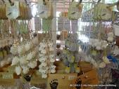 20110713北海道旭川市旭山動物園:P1170162.JPG