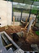 20110713北海道旭川市旭山動物園:P1170322.JPG