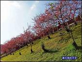 20200212台北內湖樂活夜櫻季:萬花筒12櫻花.jpg
