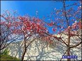 20200212台北內湖樂活夜櫻季:萬花筒13櫻花.jpg