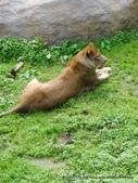 20110713北海道旭川市旭山動物園:P1170323.JPG
