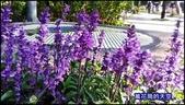 20200316台北杜鵑花季:萬花筒9大安杜鵑花.jpg