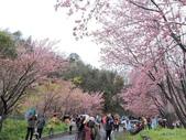 20170225台中武陵農場賞櫻趣:DSCN4316.JPG