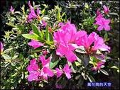 20200316台北杜鵑花季:萬花筒3大安杜鵑花.jpg