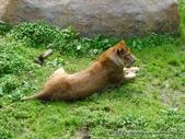 20110713北海道旭川市旭山動物園:P1170324.JPG