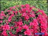 20200316台北杜鵑花季:萬花筒28大安杜鵑花.jpg