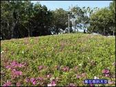 20200316台北杜鵑花季:萬花筒30大安杜鵑花.jpg