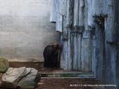 20110713北海道旭川市旭山動物園:P1170333.JPG