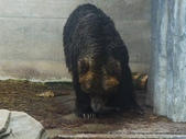 20110713北海道旭川市旭山動物園:P1170334.JPG