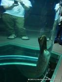 20110713北海道旭川市旭山動物園:P1160994.JPG
