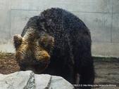 20110713北海道旭川市旭山動物園:P1170335.JPG