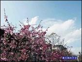 20200212台北內湖樂活夜櫻季:萬花筒1樂活公園.jpg