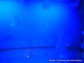 20110713北海道旭川市旭山動物園:P1160999.JPG