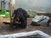 20110713北海道旭川市旭山動物園:P1170336.JPG