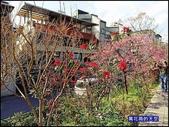 20200212台北內湖樂活夜櫻季:萬花筒1櫻花.jpg