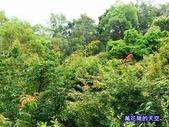 20190719苗栗天空之城景觀餐廳Chateau in the air:萬花筒86新竹.jpg
