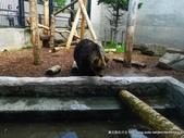 20110713北海道旭川市旭山動物園:P1170337.JPG