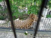 20110713北海道旭川市旭山動物園:P1170288.JPG