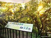 20090724宜蘭青蔥酒堡蘭雨節:IMG_7804.JPG