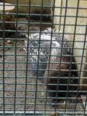 20110713北海道旭川市旭山動物園:P1170477.JPG