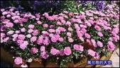20200316台北杜鵑花季:萬花筒8大安杜鵑花.jpg
