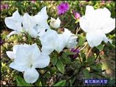 20200316台北杜鵑花季:萬花筒27大安杜鵑花.jpg