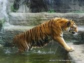 20110713北海道旭川市旭山動物園:P1170349.JPG
