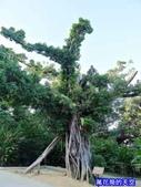 20180102日本沖繩首里城公園:20180102沖繩1581.jpg