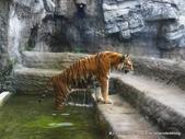 20110713北海道旭川市旭山動物園:P1170350.JPG
