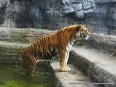 20110713北海道旭川市旭山動物園:P1170351.JPG