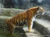 20110713北海道旭川市旭山動物園:P1170352.JPG