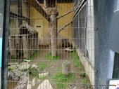 20110713北海道旭川市旭山動物園:P1170486.JPG