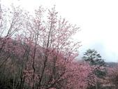 20170225台中武陵農場賞櫻趣:DSCN4304.JPG