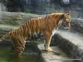 20110713北海道旭川市旭山動物園:P1170354.JPG