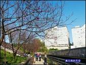 20200212台北內湖樂活夜櫻季:萬花筒11樂活公園.jpg