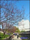 20200212台北內湖樂活夜櫻季:萬花筒12樂活公園.jpg
