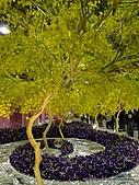 20110411&爭艷館~台灣花卉展:P1100916.JPG