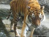 20110713北海道旭川市旭山動物園:P1170355.JPG